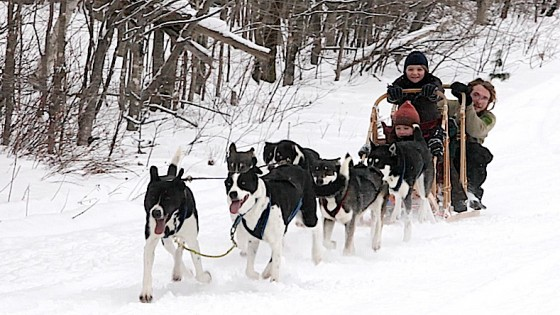 dogsledding_Spash