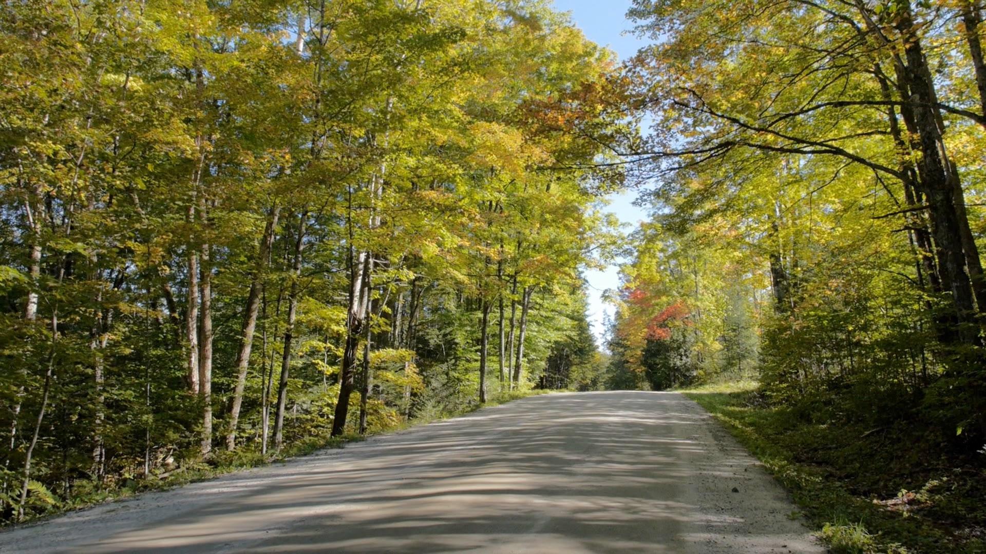 foliage sept 17