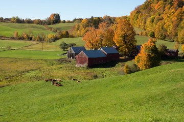 Jennie Farm in the Fall